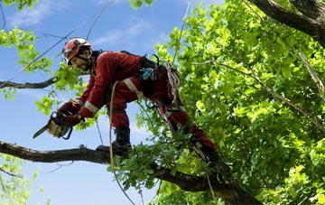 find trusted rated West Dunbartonshire tree surgeons