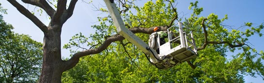 West Dunbartonshire tree surgery services