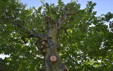what is West Dunbartonshire tree surgery?